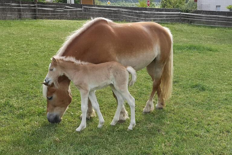 2020-05-10 Pferde