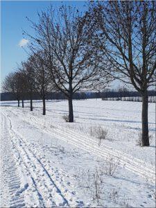 2021-02-12 13.13.59 Winterwanderung auf dem Hoehenweg